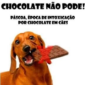 Pet chocolate